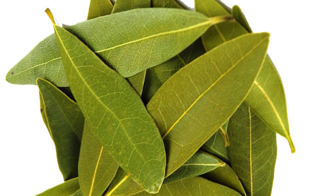 Bay leaf herbs