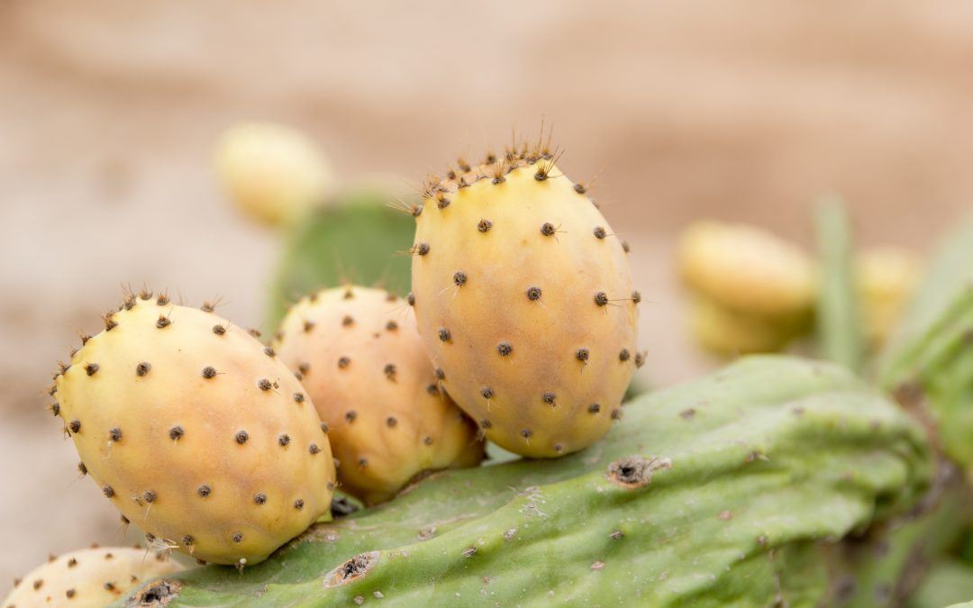 The leading and trusted name for prickly pear seed oil