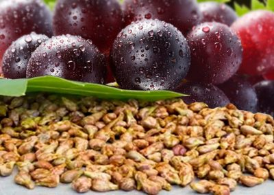 GRAPE SEED VEGETABLE OIL