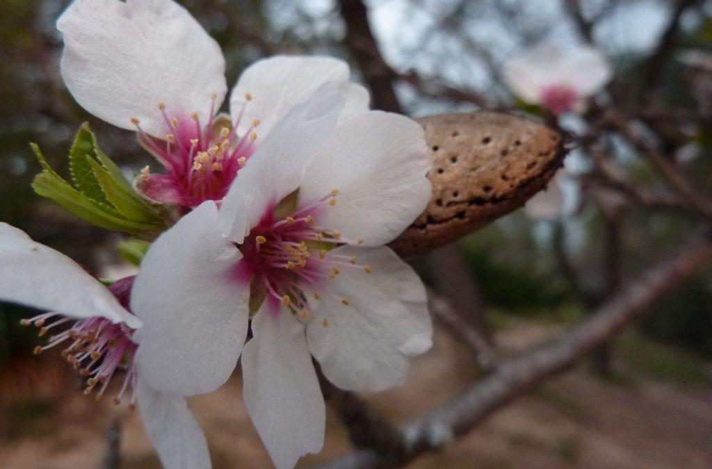 Almond perfume