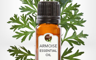 Choosing the Right Bulk Armoise Essential Oil Supplier
