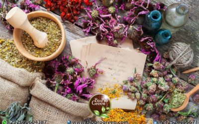 8 Powerhouse Herbs You Need To Add To Your Beauty Routine
