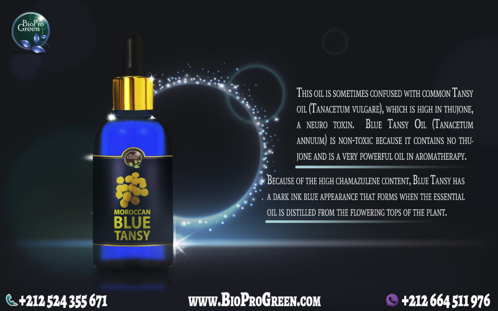 Moroccan Blue Tansy essential oil - chamomile essential oil