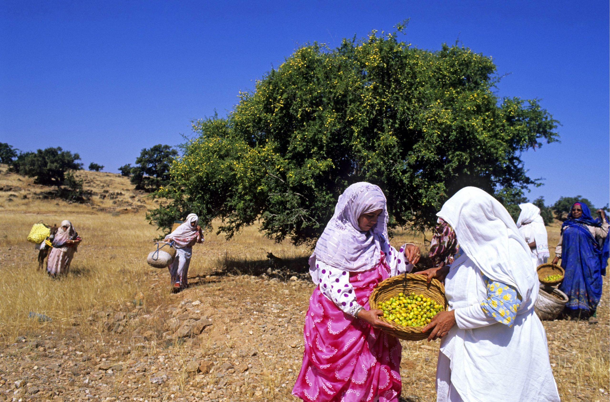 argan oil oriental